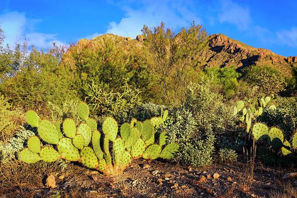 Photograph - Sonoran Below Pusch Ridge H1848 by Mark Myhaver