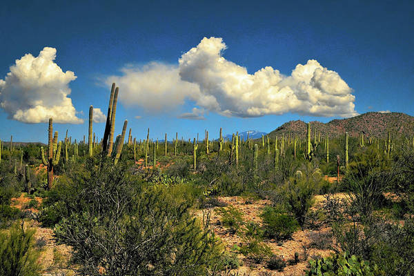 Photograph - Sonoran Cotton Ball Clouds by Chance Kafka