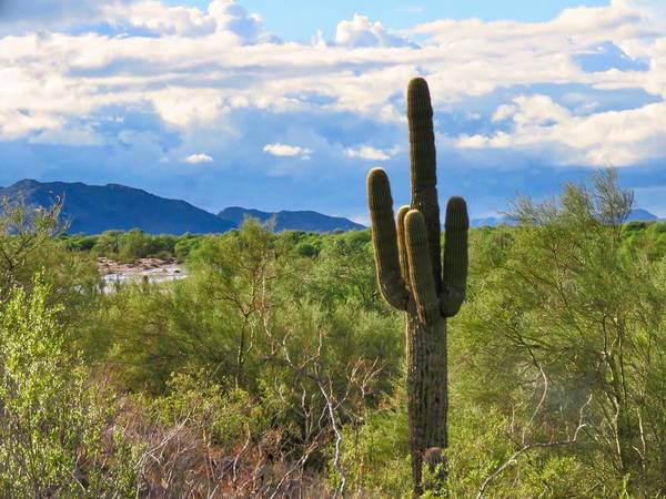 Photograph - Sonoran Desert Landscape Post-monsoon by Judy Kennedy