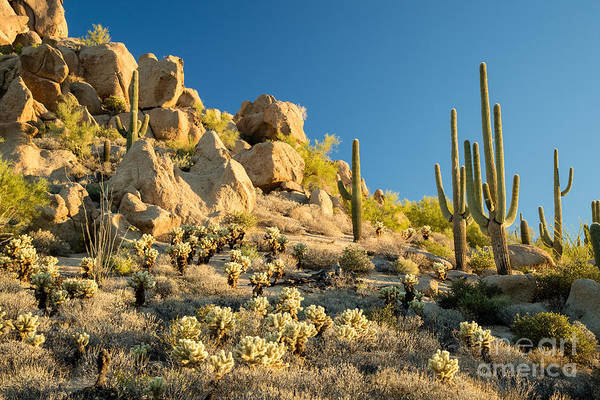 Wall Art - Photograph - Sonoran Desert Landscape by Stacy Funderburke