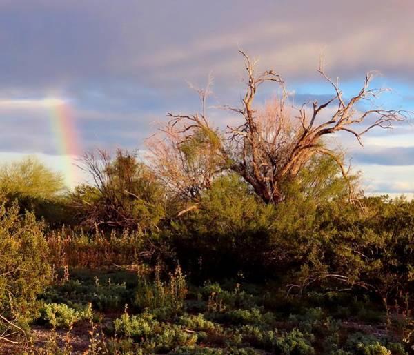 Sonoran Desert Spring Rainbow Art Print