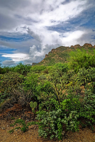 Photograph - Sonoran Monsoon Season V1648 by Mark Myhaver