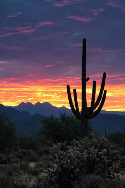 Wall Art - Photograph - Sonoran Saguaro Sunrise Calling  by Saija Lehtonen