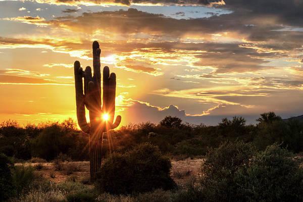 Wall Art - Photograph - Sonoran Summer Sunshine  by Saija Lehtonen