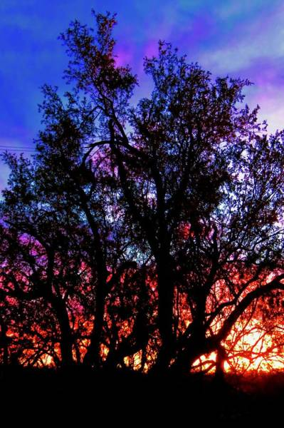 Photograph - Sonoran Sunrise Ironwood Silhouette by Judy Kennedy