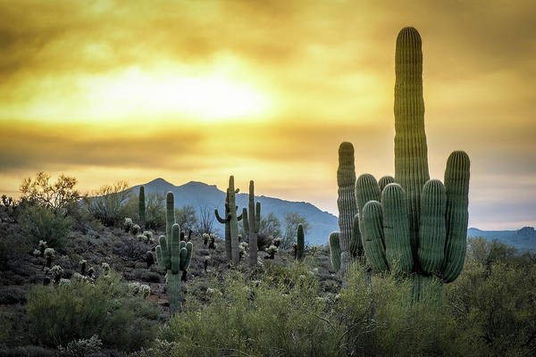 Photograph - Sonoran Sunrise by Philip Rispin