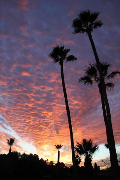 Photograph - Sonoran Sunset by William T Templeton