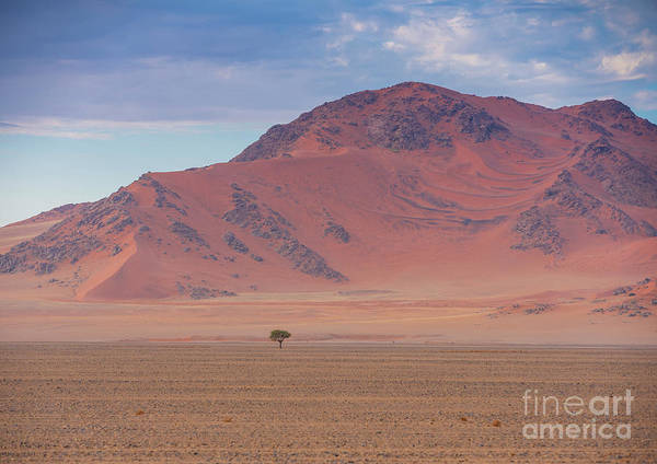 Wall Art - Photograph - Sossusvlei Namibia Solitary Tree by Mike Reid