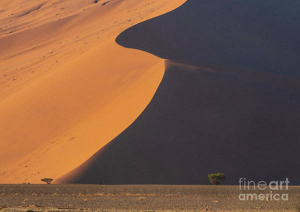 Wall Art - Photograph - Sossusvlei Namibia Two Trees by Mike Reid
