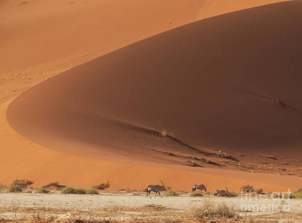 Wall Art - Photograph - Sossusvlei The Oryx And The Curve by Mike Reid
