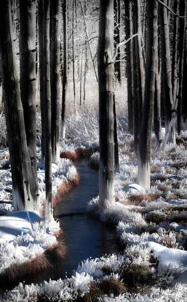 Photograph - Soul Of Winter by Karen Wiles