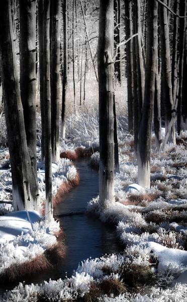 Wall Art - Photograph - Soul Of Winter by Karen Wiles