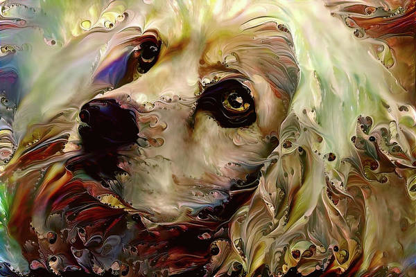 Digital Art - Soulful Cocker Spaniel by Peggy Collins