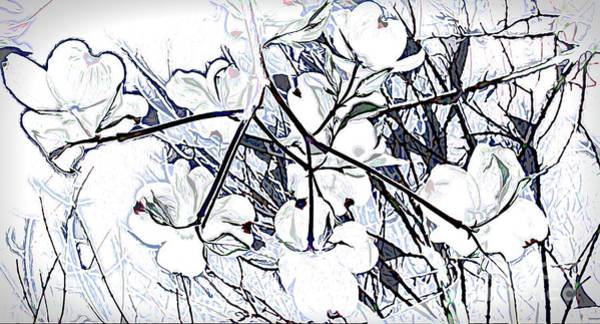Photograph - Soulful Dogwood Blossoms by Debra Lynch