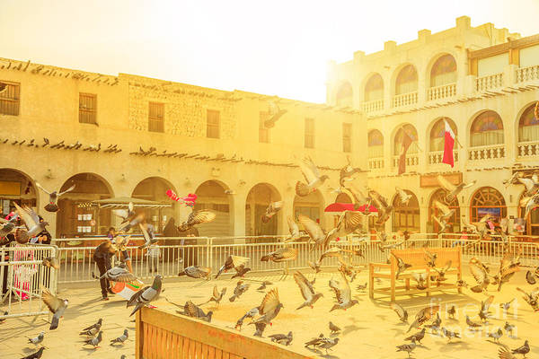 Photograph - Souq Waqif Pigeons by Benny Marty