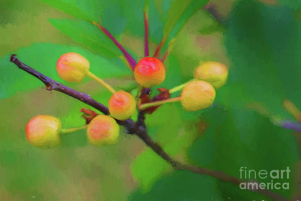 Wall Art - Digital Art - Sour Cherries 5061ti2c by Doug Berry
