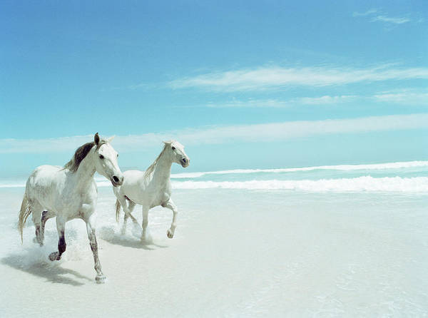 Horse Photograph - South Africa, Cape Town, Norrdhoek, Two by Stuart Mcclymont