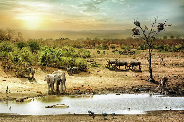 Photograph - South African Safari Wildlife Fantasy Scene by Susan Schmitz