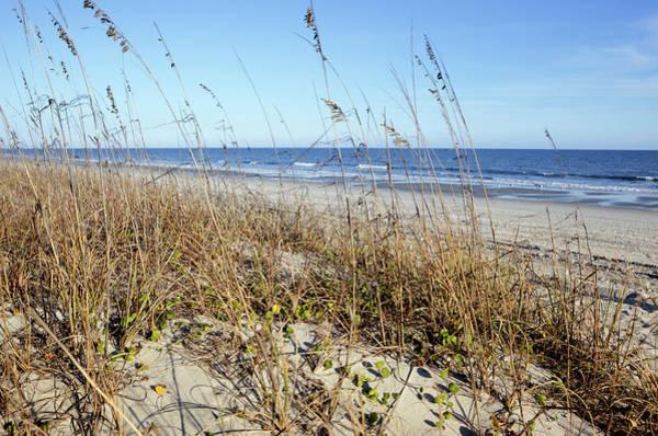 South Carolina Photograph - South Carolina Beach Dunes by Davealan