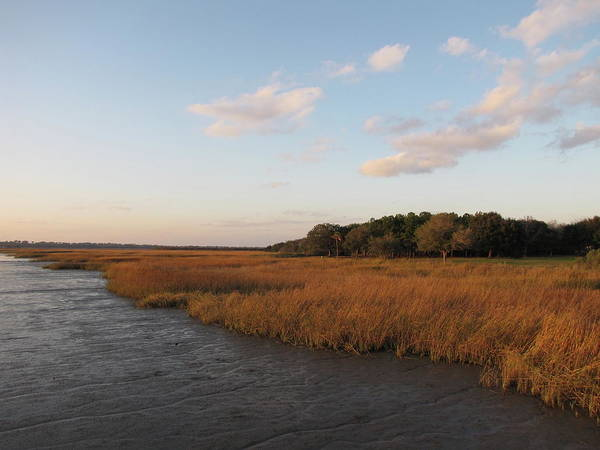 Urban Nature Photograph - South Carolina Marsh In The Afternoon by Daniela Duncan