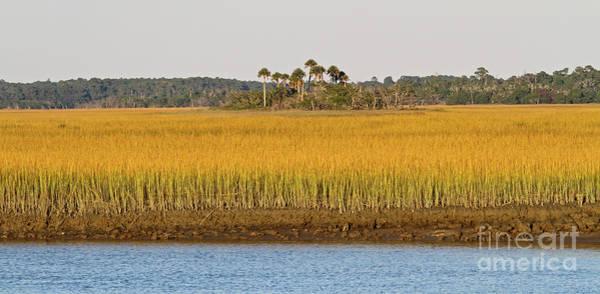 Photograph - South Carolina Salt Marsh by Kevin McCarthy
