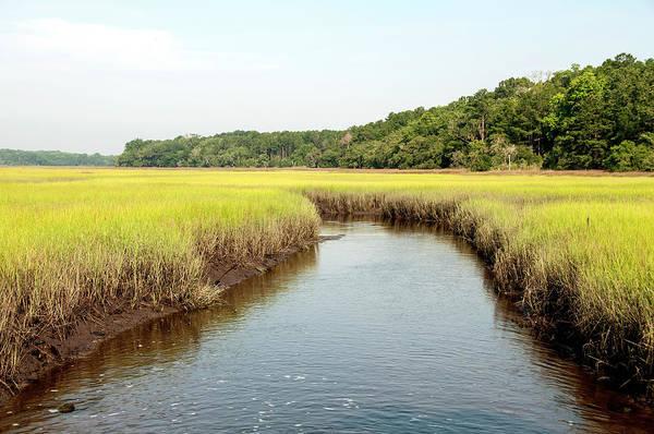 South Carolina Photograph - South Carolina Salt Marsh by M Timothy O'keefe