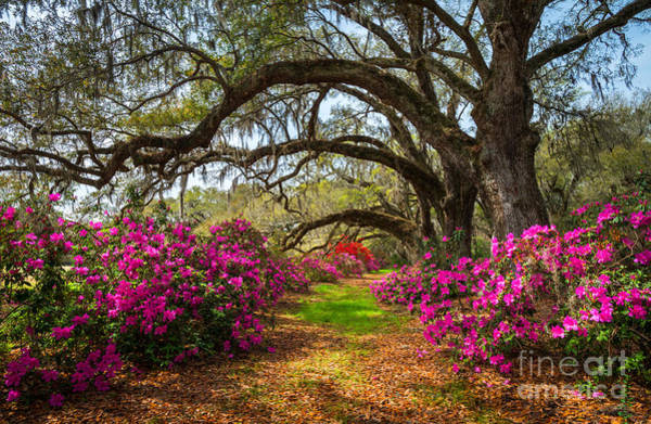 April Wall Art - Photograph - South Carolina Spring Flowers by Dave Allen Photography