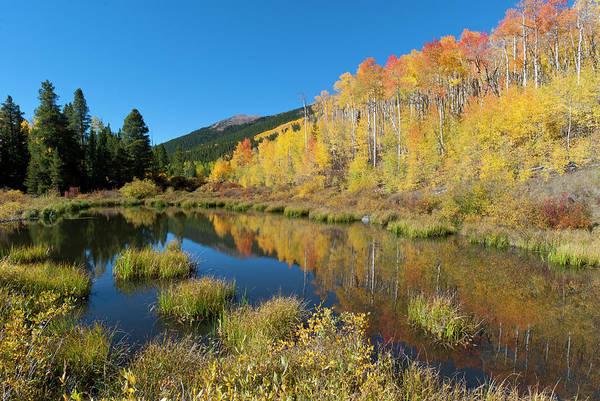 Photograph - South Elbert Autumn Beauty by Cascade Colors