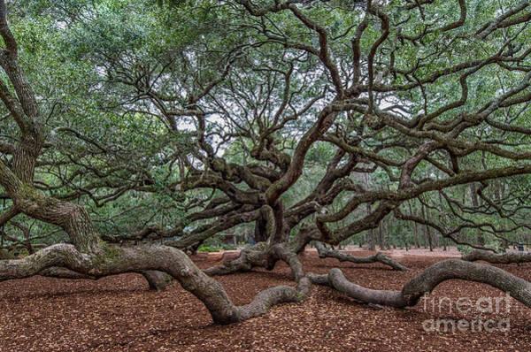 Photograph - Southern Angel Oak Tree Near Charleston South Carolina  by Dale Powell