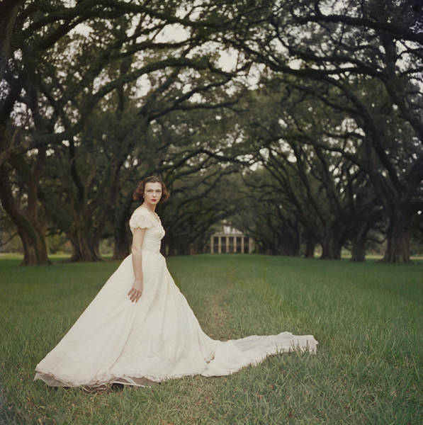 Dress Photograph - Southern Belle by Slim Aarons