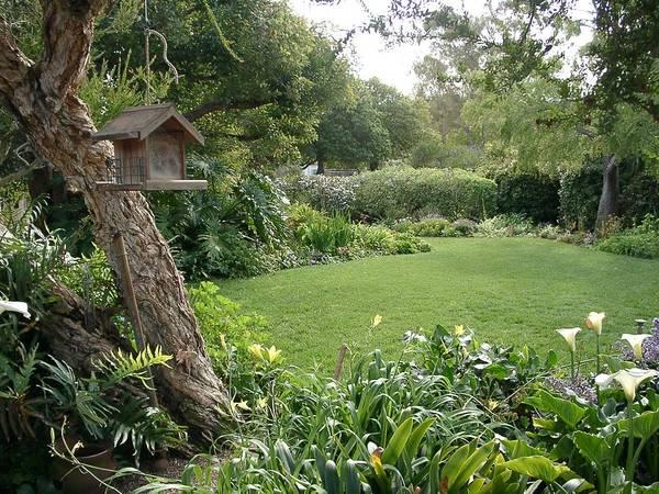 Calla Photograph - Southern California Garden by Abby Lanes