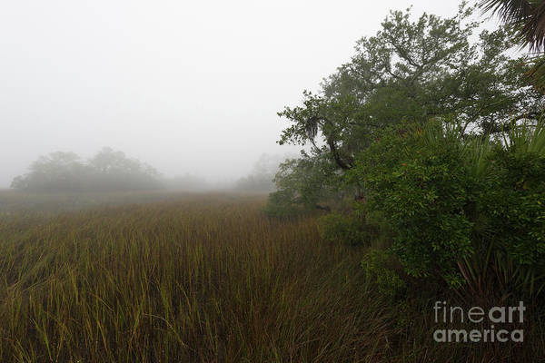 Photograph - Southern Framed Fog by Dale Powell