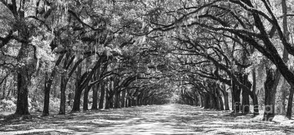 Photograph - Southern Homecoming In Black And White by Carol Groenen