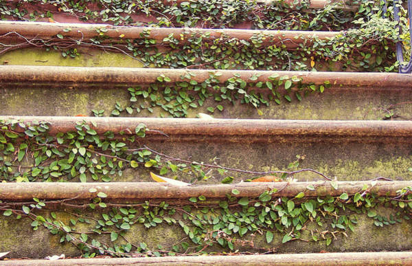 Photograph - Southern Steps Of Ivy by JAMART Photography