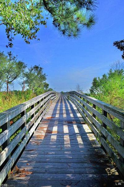 Photograph - Southern Stroll by Lisa Wooten