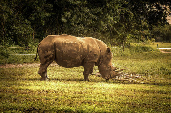 Wall Art - Photograph - Southern White Rhinoceros by Art Spectrum