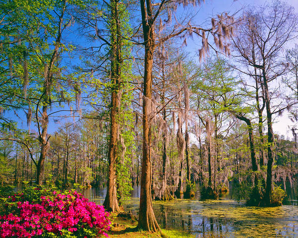 Southern Usa Photograph - Southern Woodland Garden  P by Ron thomas