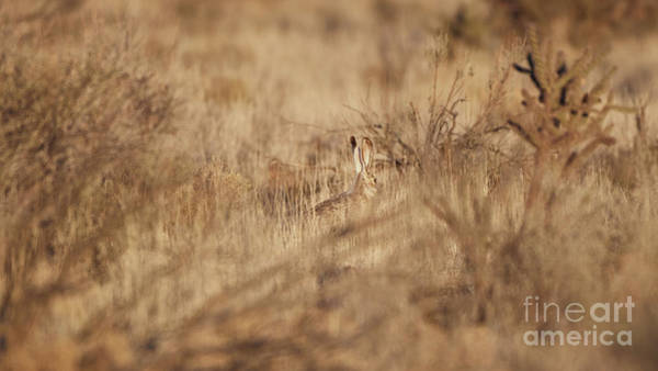 Photograph - Southwest Bunny by Robert WK Clark