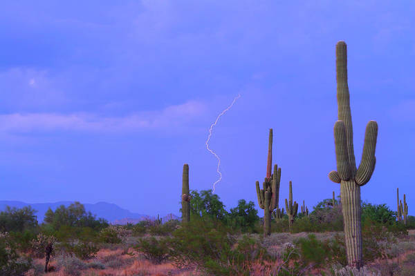 Photograph - Southwest Sonoran Desert Lightning Strike by James BO Insogna