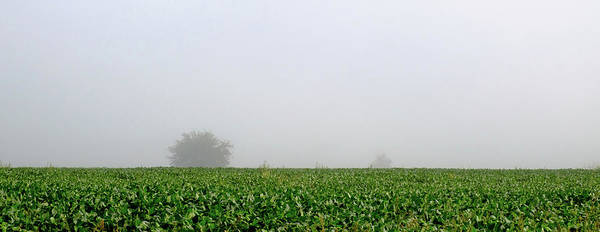 Wall Art - Photograph - Soybean Field With A Foggy Morning Sky. by Claudia Botterweg