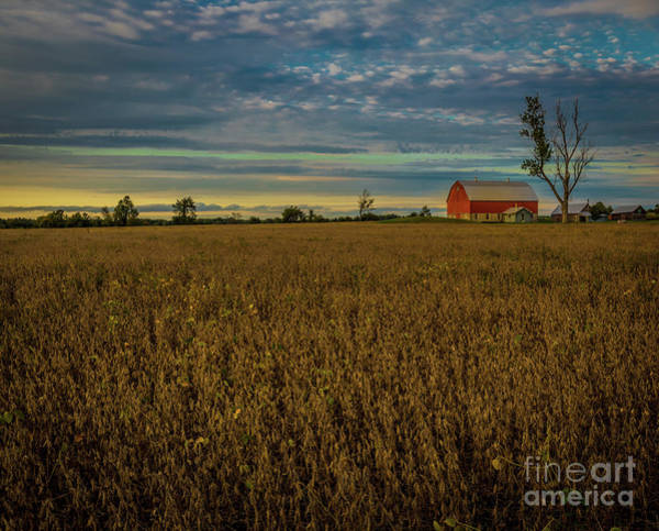 Photograph - Soybean Sunset by Roger Monahan
