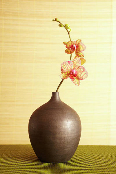 Home Interior Photograph - Spa Still Life Of Orchid Flower In Vase by Gspictures