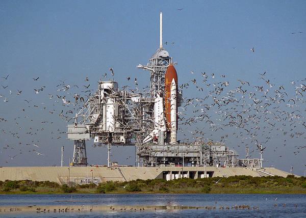 Wall Art - Digital Art - Space Shuttle And Birds by Filip Hellman