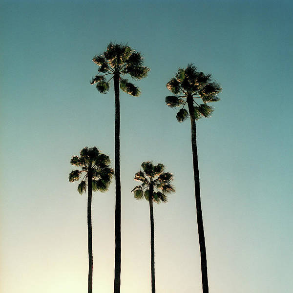 Wall Art - Photograph - Spain, Sevilla, Palms Swaying In The by Mark Horn