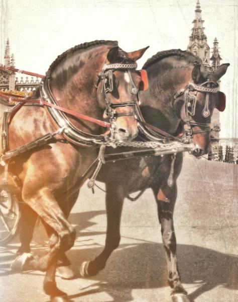 Photograph - Spanish Horses  by JAMART Photography