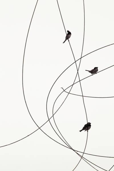 June Photograph - Spanish Sparrow Passer Hispaniolensis by J-p Lahall