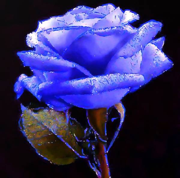 Painting - Sparkling Blue Rose by Catherine Lott