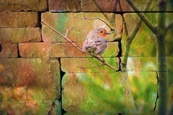 Color Block Painting - Sparrow Graffiti by ArtMarketJapan