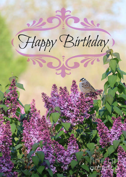 Photograph - Sparrow In Lilacs Birthday Card by Carol Groenen