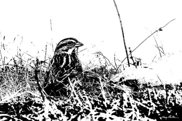 Photograph - Sparrow In Snow by Harry Moulton